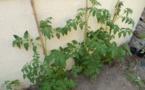 En jardinage : ça pousse !!!